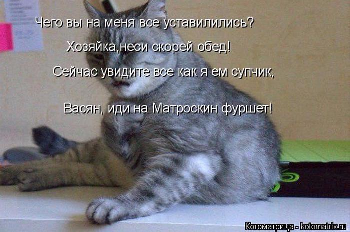 kotomatritsa_Bh (700x464, 349Kb)