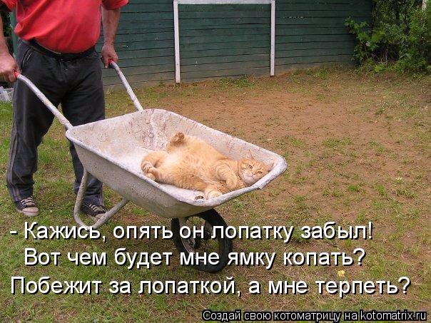 kotomatritsa_L (1) (604x453, 313Kb)