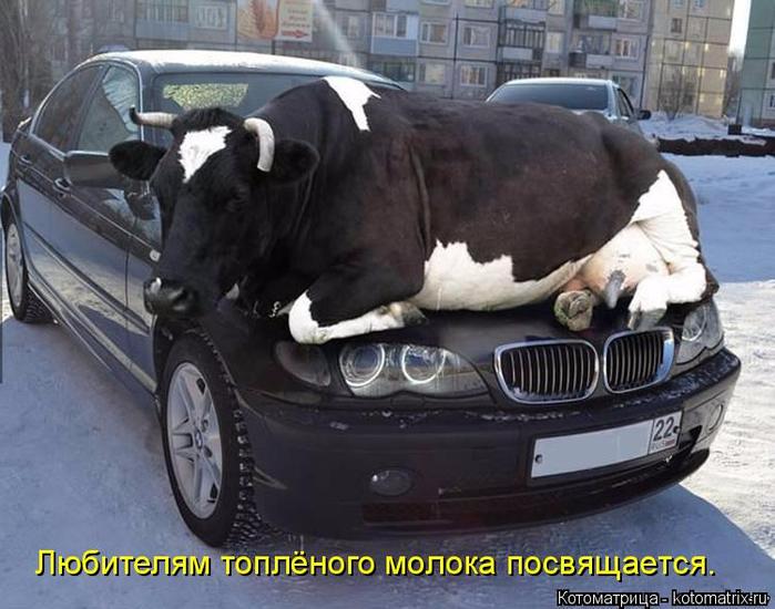 kotomatritsa_O5 (700x550, 344Kb)