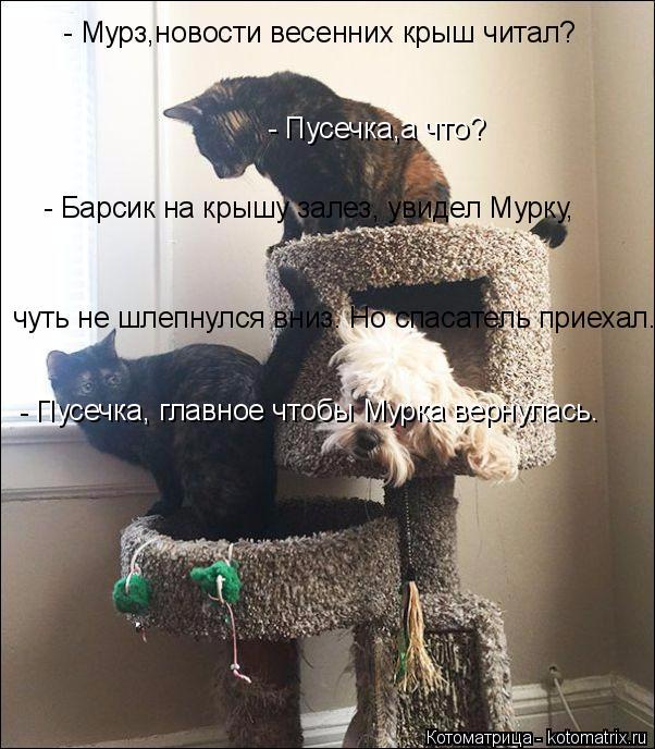 kotomatritsa_P (602x688, 283Kb)