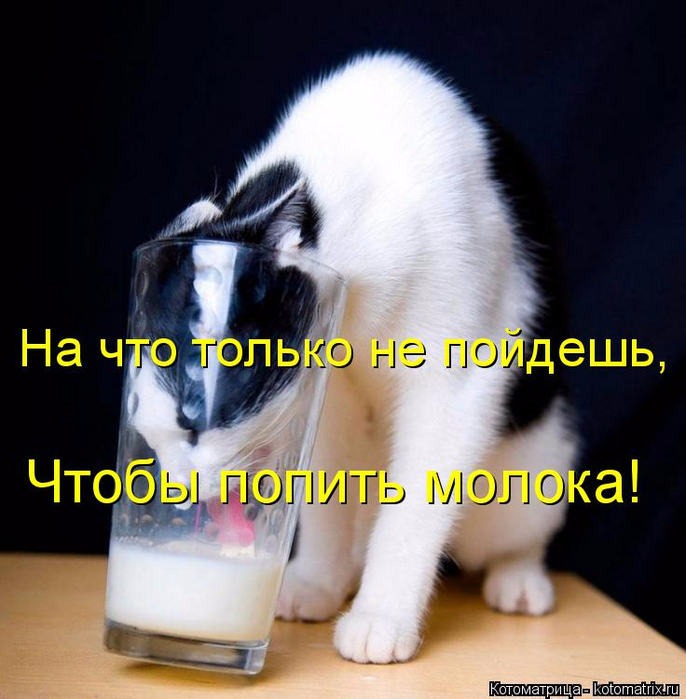 kotomatritsa_S (686x700, 353Kb)