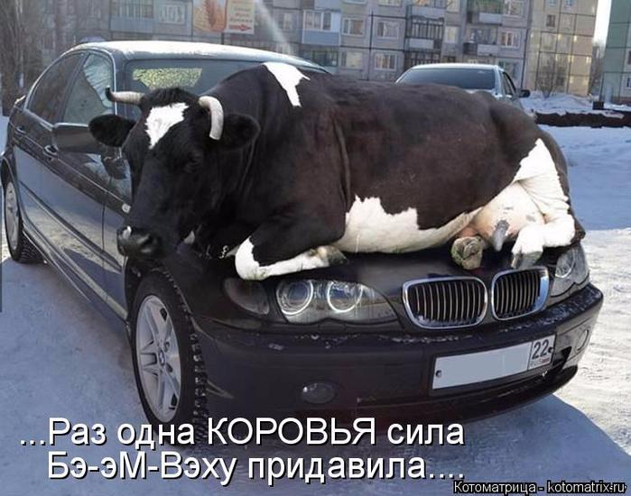 kotomatritsa_xU (700x550, 343Kb)