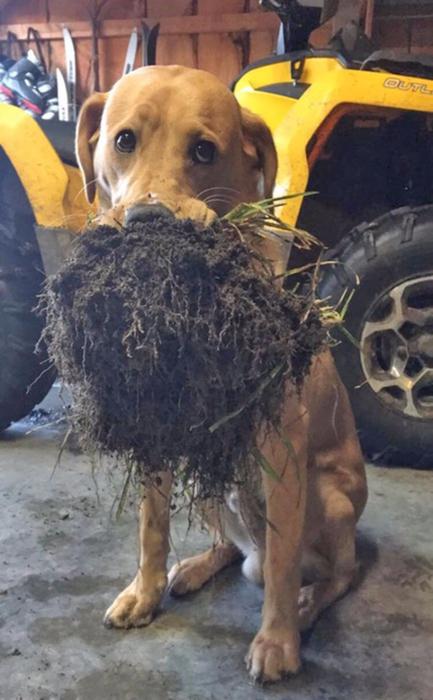 смешные фото собак 10 (433x700, 306Kb)