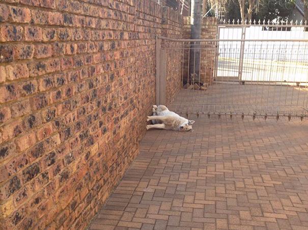 смешные фото собак 1 (605x451, 355Kb)