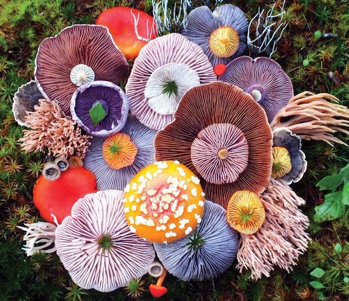 ленд арт фото грибов 2 (700x603, 631Kb)