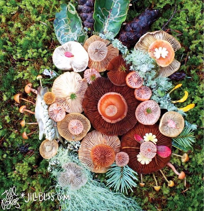 ленд арт фото грибов 4 (677x700, 710Kb)