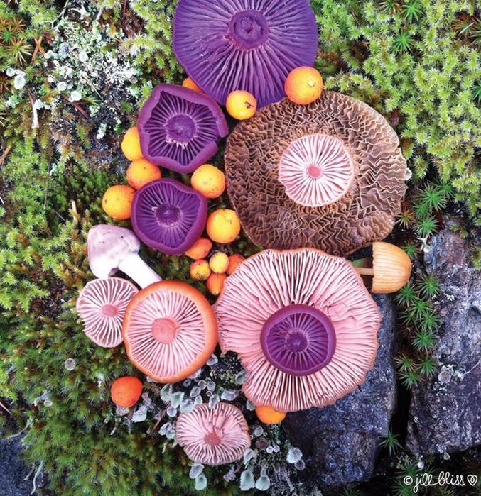 ленд арт фото грибов 9 (677x700, 685Kb)