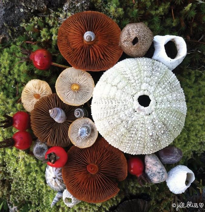 ленд арт фото грибов 10 (677x700, 585Kb)