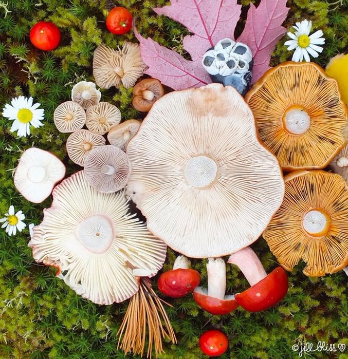 ленд арт фото грибов 11 (677x700, 658Kb)