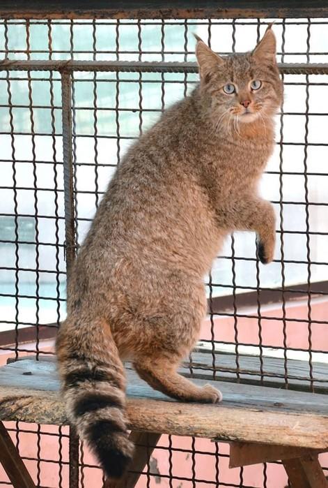 20 редких диких кошек, о которых мало кто знает