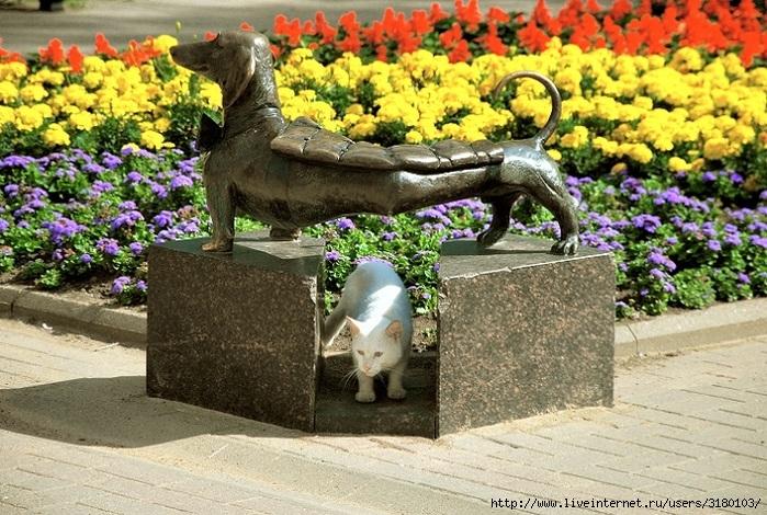 _кошка под таксой (700x470, 325Kb)