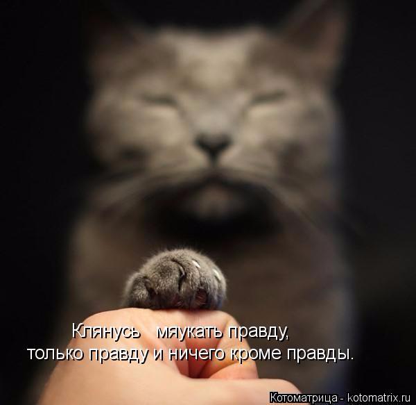 kotomatritsa_A (600x583, 144Kb)