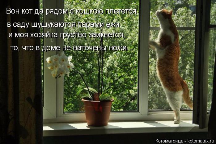kotomatritsa_QL (700x465, 344Kb)