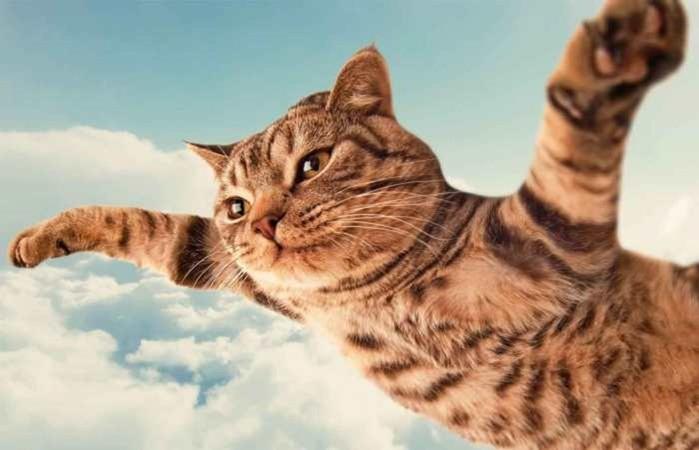 Почему нельзя фотографировать кошек?