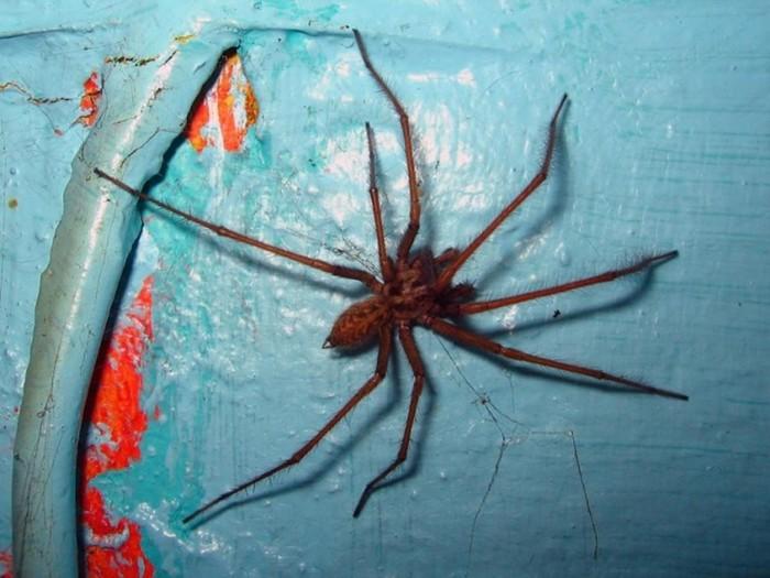 Правдивые и вымышленные истории о жутких пауках