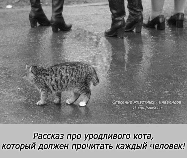 Рассказ про уродливого кота (604x508, 69Kb)