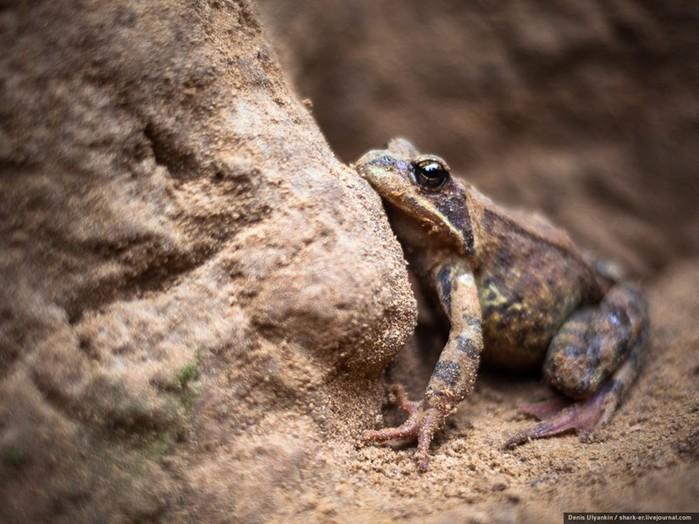 Что происходит зимой с лягушками? Где они прячутся