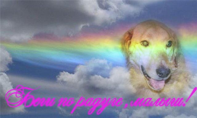Душа собаки не умирает