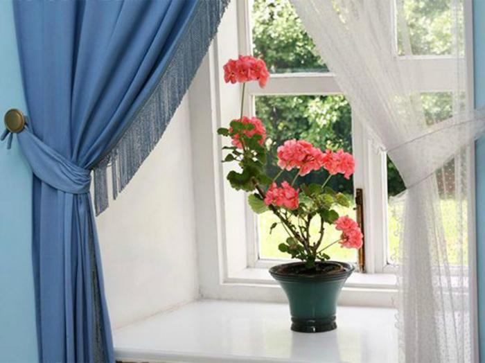 """alt=""""Комнатные растения в вашем доме""""/2835299_Komnatnie_rasteniya_v_vashem_dome2 (700x524, 287Kb)"""