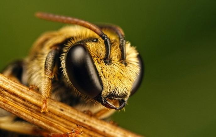 Как общаются пчелы и другие насекомые?