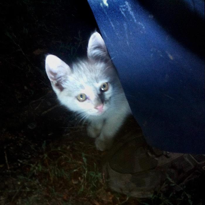 Белый котёнок. Совсем ничей/683232_kotyata2 (700x700, 578Kb)