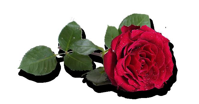 СЌРІСЌРІРІСЌ (663x348, 190Kb)