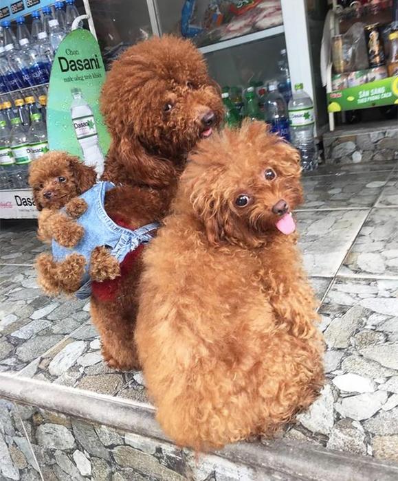 смешные собаки фото 4 (579x700, 454Kb)
