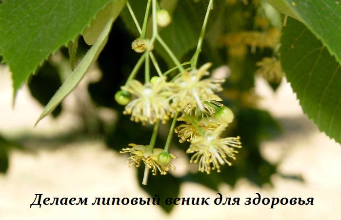 2749438_Recept_dlya_systavov_ot_pyatochnoi_shpori_i_kostochek_na_stypnyah (699x452, 374Kb)