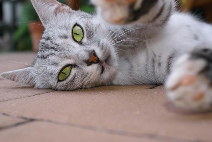 Странные привычки кошек