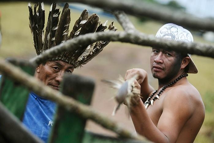 Сохранившиеся племена людоедов, где туристов будут пытать, резать, убивать иесть