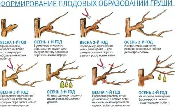 Когда сажают грушу весной или осенью 92