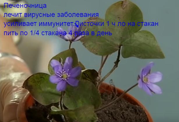 134898026_72d041cc1f (615x419, 325Kb)