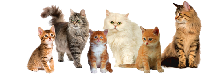 258624-animals-933 (700x257, 230Kb)