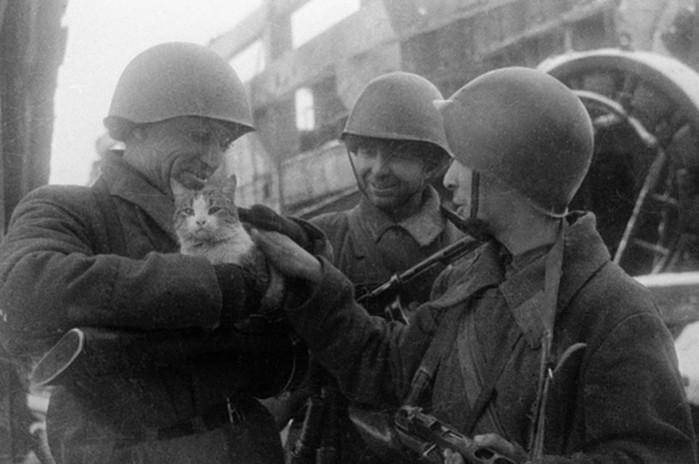«Сибирский отряд»: как кошки спасли Ленинград от крыс