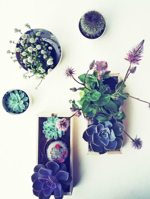 20 оригинальных способов озеленения квартиры, которые позволят создать особый микроклимат