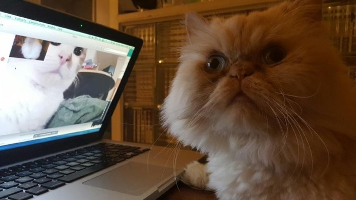 Мой Skype