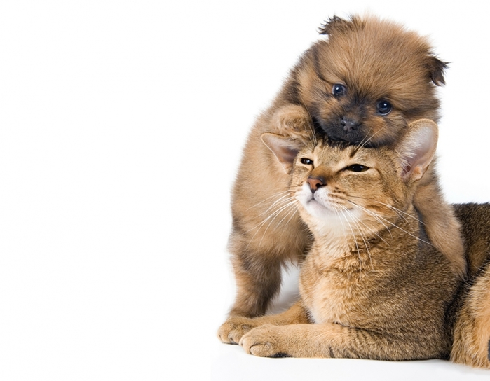 2714816_Cats_Dogs_White_background_Two_Puppy_524510_1316x1024 (700x544, 188Kb)