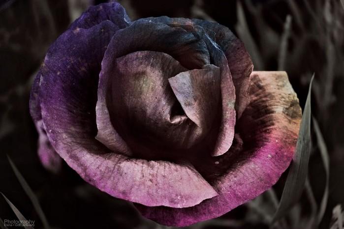 Замечательные и неповторимые снимки от начинающего фотографа Елены Гладышевской