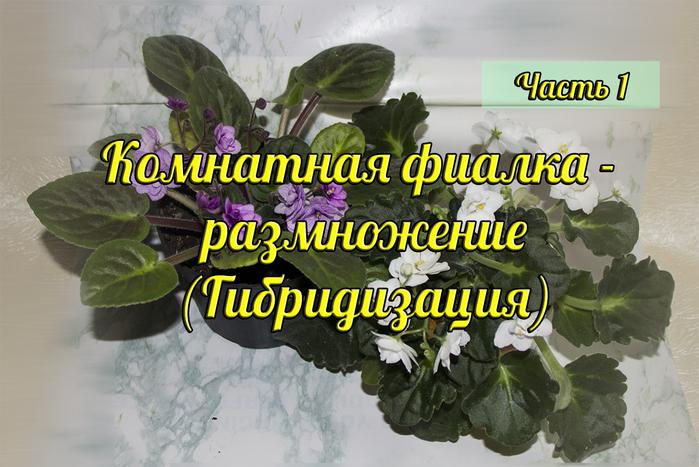 4394744_IMG_0317_zastavka (700x467, 330Kb)