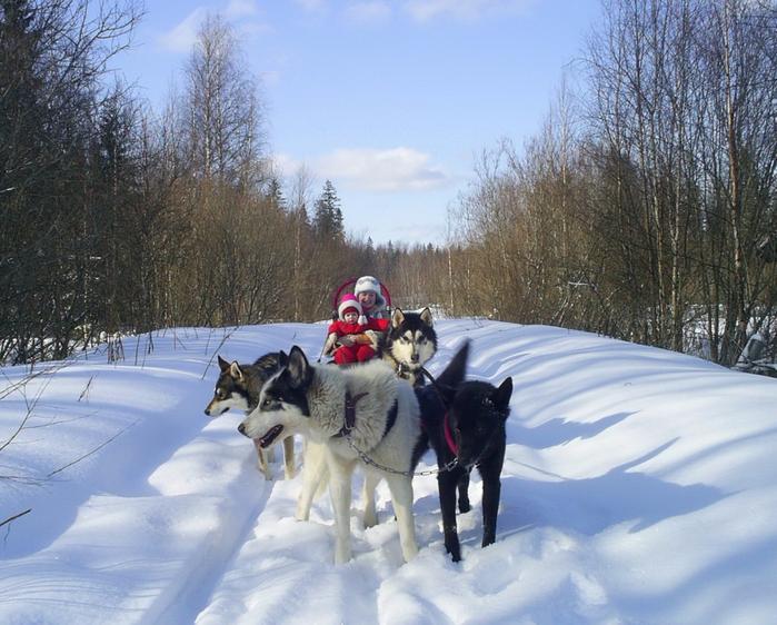 Novyiy-god-v-Karelii-2017 (700x562, 439Kb)