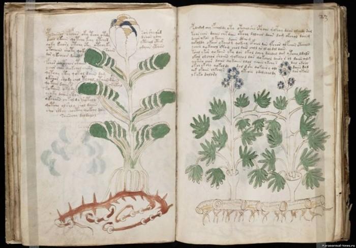 Почему Манускрипт Войнича считается самым загадочным текстом в истории?