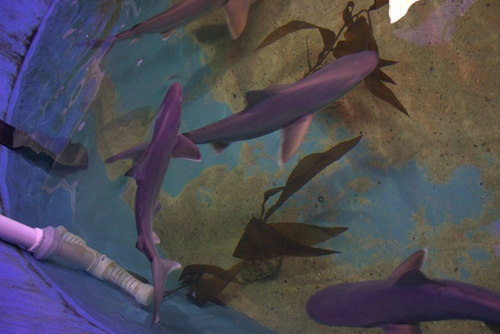 08092017-sharks-in-basement-5 (500x334, 133Kb)