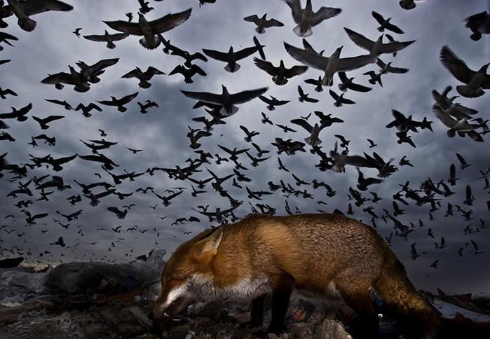 Шокирующие снимки пернатых и нетронутой природы