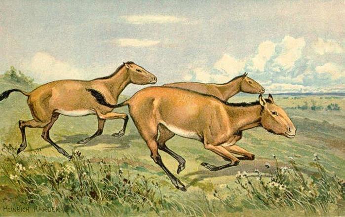 Интересные факты о лошадях для любителей этих животных!