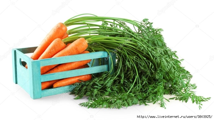 depositphotos_82064748-stock-photo-fresh-carrots-in-wooden-crate (700x391, 186Kb)