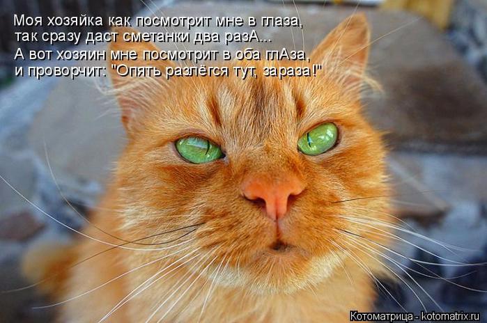 kotomatritsa_IR (700x464, 372Kb)