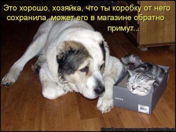 1339171880_prikolnie-kotomatrici_bygaga.com.ua_7399-46 (700x525, 271Kb)