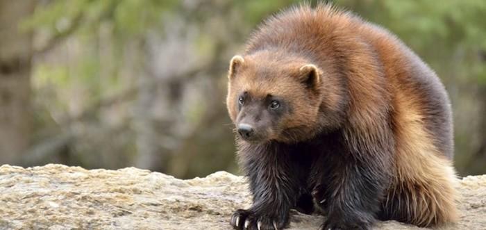 25 опасных животных, которые только кажутся милыми