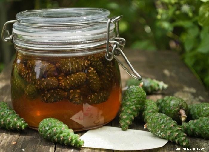 """alt=""""«Сосновый мёд» – уникальное средство от простуды и кашля!""""/2835299__3_ (700x509, 253Kb)"""