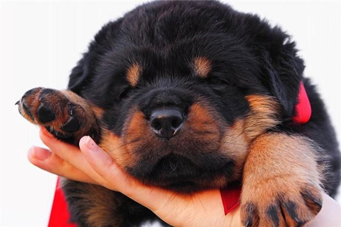 10 самых преданных пород собак